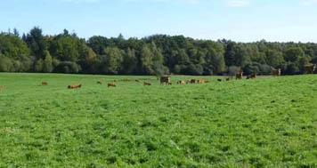 La sélection d'élevage à travers l'agriculture raisonnée